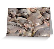 Many Hippos Greeting Card