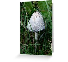 Ink Cap Mushroom Greeting Card