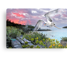Longtail over Castle Island Metal Print