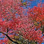 Red tree in the fall by Lorale