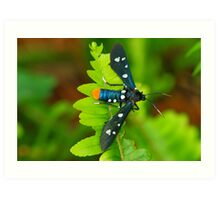 Oleander Moth Art Print