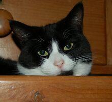 Binky in the Knicker Drawer by ApeArt
