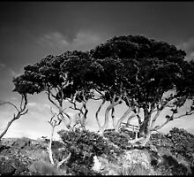 NZ Tree by Alan Bennett