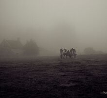 Cows (at Rafford) by Tez Watson