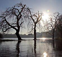 Flood by John Thurgood