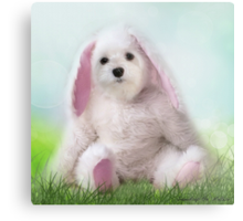 Snowdrop the Maltese - Dressing Up for Easter ! Metal Print