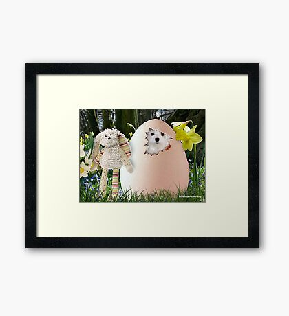 Snowdrop the Maltese - Is it Easter Yet ? Framed Print