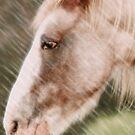 Old Horse by Tiffany Warren