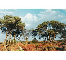 Outback trees Photographic Print