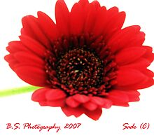 Red Flower by Sade