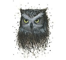 Oliver the Owl Photographic Print