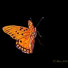 Butterfly  by Pat Moore