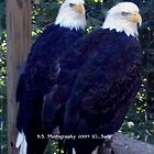 Two Beautiful Bald Eagles by Sade