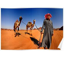 A Bedouin with his two camels.  Poster