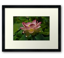 Lotus Lily Framed Print