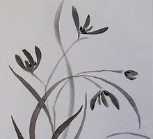 Black & white orchid by Donna Mearns