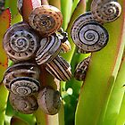 Snails doing what they do! by avocet