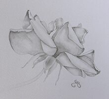 Rose by Donna Mearns