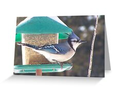 Look at the Birdie! Greeting Card
