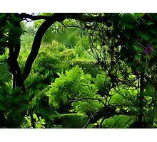 Mystics Garden Photographic Print