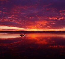 Belmont Sunset by Chris Wheat