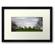 Capesthorne Trees Framed Print