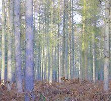 etherial woods by KAREN CUZNER