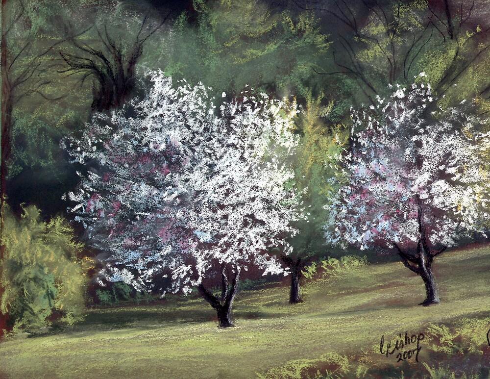 Spring on Franklin Road by Carolyn Bishop