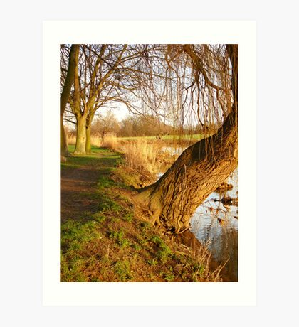 Under The Willow Art Print
