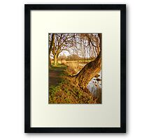 Under The Willow Framed Print