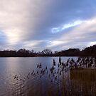 Water's Edge by Debbie Black