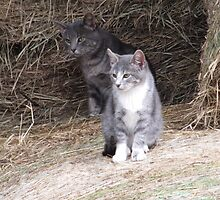 Gray Cat and KIttens on Farm Hay Photograph by Adri Turner
