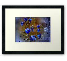 Summer blues Framed Print
