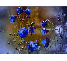 Summer blues Photographic Print