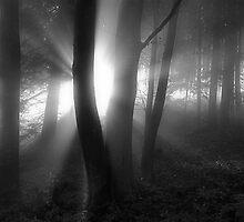 Black & White by niklens