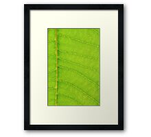 Go Green, Save the Earth - Mother Nature' Veins Framed Print