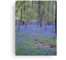 Beautiful bluebells number 2 Canvas Print