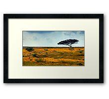 Lone Acacia Tree. Western Negev, Israel Framed Print