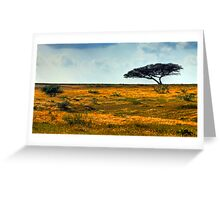 Lone Acacia Tree. Western Negev, Israel Greeting Card