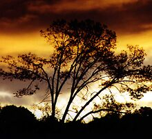Foothill Silhouette  by Lisa Anne McKee