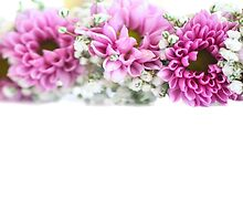 purple and mauve Flower frame on white  by PhotoStock-Isra