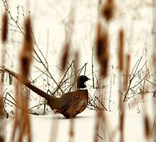 Cattail Camoflage by Ryan Houston