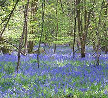 Beautiful bluebells number 3 by InterestingImag
