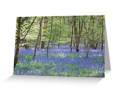 Beautiful bluebells number 3 Greeting Card