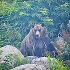 Grizzly in the Mist by Tracy Riddell