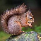 Nuts by FranJ