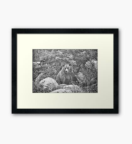 Grizzly in the Mist - Black & White Framed Print