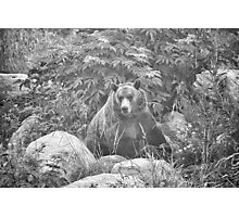 Grizzly in the Mist - Black & White Photographic Print