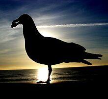 Seagull At Sunset by Raegan