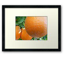 Plump Oranges Framed Print